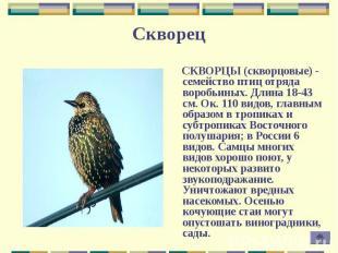 СКВОРЦЫ (скворцовые) - семейство птиц отряда воробьиных. Длина 18-43 см. Ок. 110