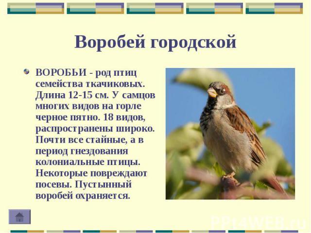 ВОРОБЬИ - род птиц семейства ткачиковых. Длина 12-15 см. У самцов многих видов на горле черное пятно. 18 видов, распространены широко. Почти все стайные, а в период гнездования колониальные птицы. Некоторые повреждают посевы. Пустынный воробей охран…