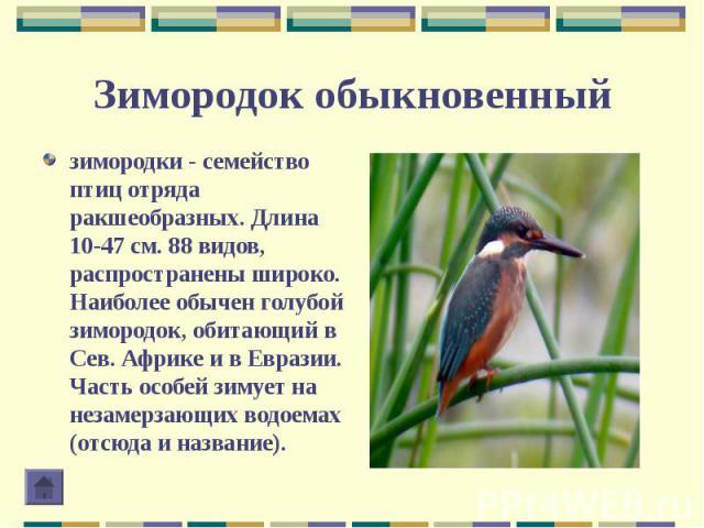 зимородки - семейство птиц отряда ракшеобразных. Длина 10-47 см. 88 видов, распространены широко. Наиболее обычен голубой зимородок, обитающий в Сев. Африке и в Евразии. Часть особей зимует на незамерзающих водоемах (отсюда и название). зимородки - …