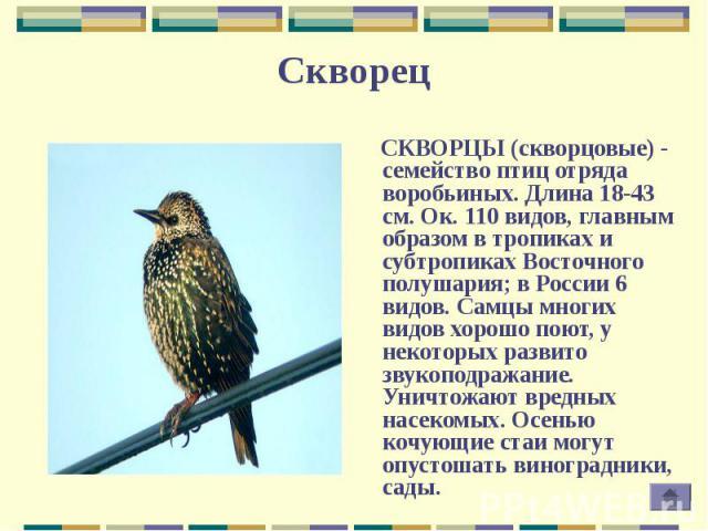 СКВОРЦЫ (скворцовые) - семейство птиц отряда воробьиных. Длина 18-43 см. Ок. 110 видов, главным образом в тропиках и субтропиках Восточного полушария; в России 6 видов. Самцы многих видов хорошо поют, у некоторых развито звукоподражание. Уничтожают …