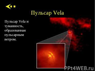 Пульсар Vela и туманность, образованная пульсарным ветром. Пульсар Vela и туманн