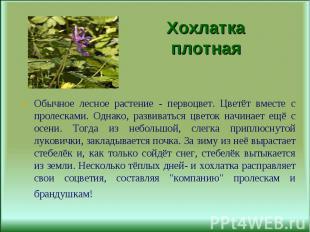 Обычное лесное растение - первоцвет. Цветёт вместе с пролесками. Однако, развива