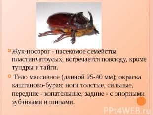Жук-носорог - насекомое семейства пластинчатоусых, встречается повсюду, кроме ту