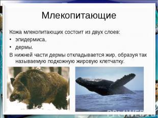 Млекопитающие Кожа млекопитающих состоит из двух слоев: эпидермиса, дермы. В ниж