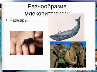 Разнообразие млекопитающих Размеры
