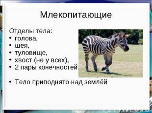 Млекопитающие Отделы тела: голова, шея, туловище, хвост (не у всех), 2 пары коне