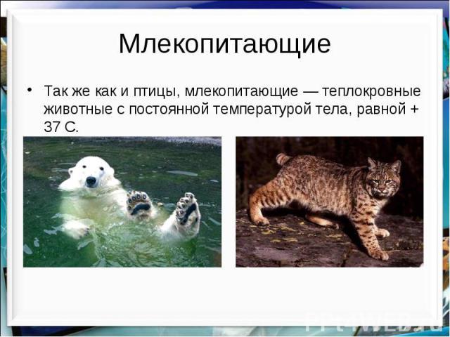 Млекопитающие Так же как и птицы, млекопитающие — теплокровные животные с постоянной температурой тела, равной + 37 С.