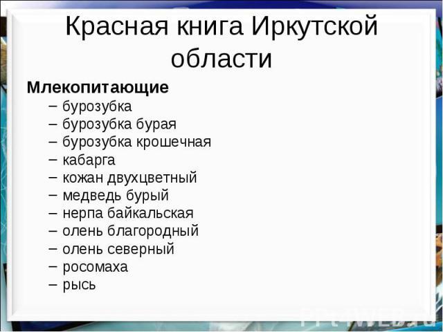 Красная книга Иркутской области Млекопитающие бурозубка бурозубка бурая бурозубка крошечная кабарга кожан двухцветный медведь бурый нерпа байкальская олень благородный олень северный росомаха рысь