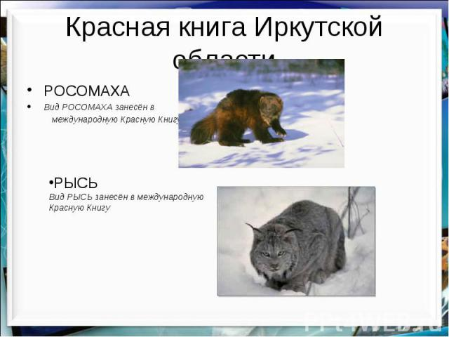 Красная книга Иркутской области РОСОМАХА Вид РОСОМАХА занесён в международную Красную Книгу
