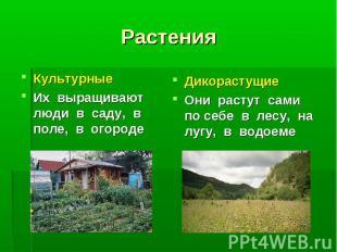 Культурные Культурные Их выращивают люди в саду, в поле, в огороде