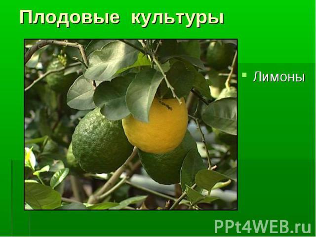 Лимоны Лимоны