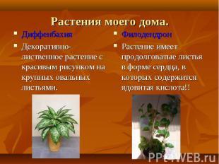 Диффенбахия Диффенбахия Декоративно-лиственное растение с красивым рисунком на к
