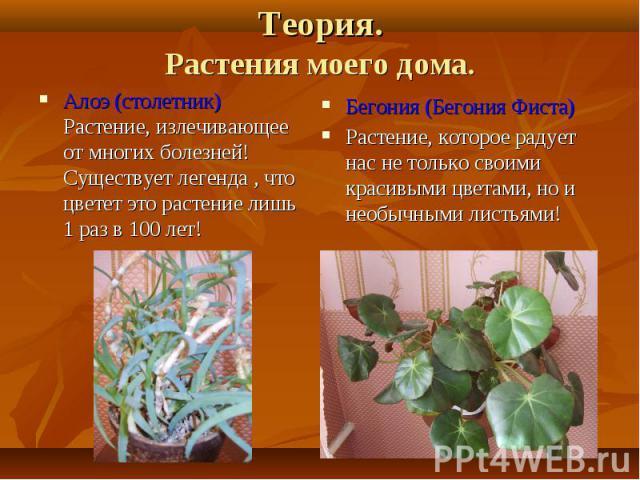 Алоэ (столетник) Растение, излечивающее от многих болезней! Существует легенда , что цветет это растение лишь 1 раз в 100 лет! Алоэ (столетник) Растение, излечивающее от многих болезней! Существует легенда , что цветет это растение лишь 1 раз в 100 лет!