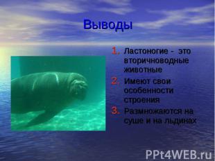 Выводы Ластоногие - это вторичноводные животные Имеют свои особенности строения