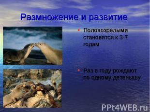 Размножение и развитие Половозрелыми становятся к 3-7 годам Раз в году рождают п