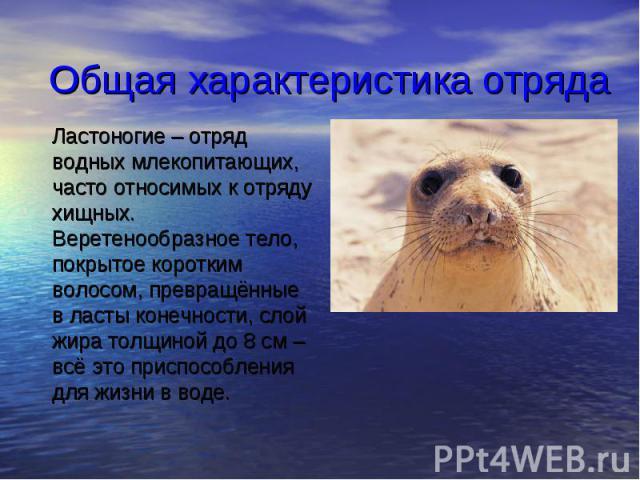 Общая характеристика отряда Ластоногие – отряд водных млекопитающих, часто относимых к отряду хищных. Веретенообразное тело, покрытое коротким волосом, превращённые в ласты конечности, слой жира толщиной до 8см – всё это приспособления для жиз…