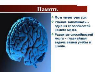 Мозг умеет учиться. Мозг умеет учиться. Умение запоминать – одна из способностей