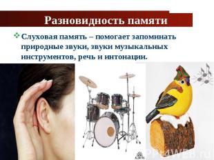 Слуховая память – помогает запоминать природные звуки, звуки музыкальных инструм