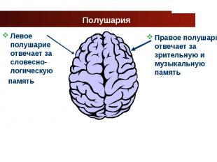 Левое полушарие отвечает за словесно-логическую Левое полушарие отвечает за слов
