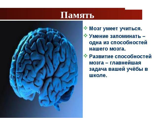 Мозг умеет учиться. Мозг умеет учиться. Умение запоминать – одна из способностей нашего мозга. Развитие способностей мозга – главнейшая задача вашей учёбы в школе.