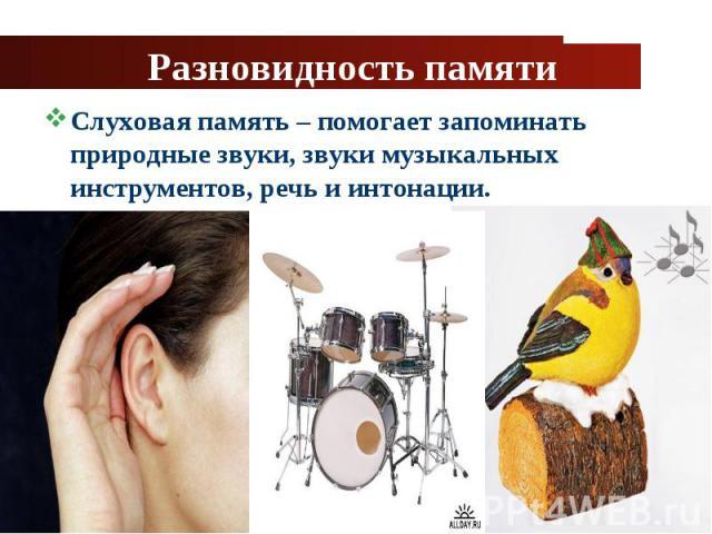 Слуховая память – помогает запоминать природные звуки, звуки музыкальных инструментов, речь и интонации. Слуховая память – помогает запоминать природные звуки, звуки музыкальных инструментов, речь и интонации.