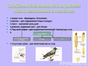 1.Форма тела - яйцевидная, обтекаемая 1.Форма тела - яйцевидная, обтекаемая 2.Кр