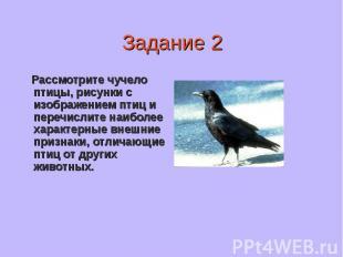 Рассмотрите чучело птицы, рисунки с изображением птиц и перечислите наиболее хар