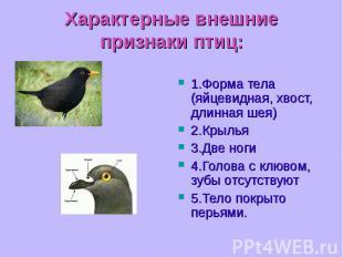 1.Форма тела (яйцевидная, хвост, длинная шея) 1.Форма тела (яйцевидная, хвост, д