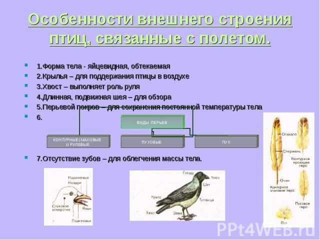 1.Форма тела - яйцевидная, обтекаемая 1.Форма тела - яйцевидная, обтекаемая 2.Крылья – для поддержания птицы в воздухе 3.Хвост – выполняет роль руля 4.Длинная, подвижная шея – для обзора 5.Перьевой покров – для сохранения постоянной температуры тела…