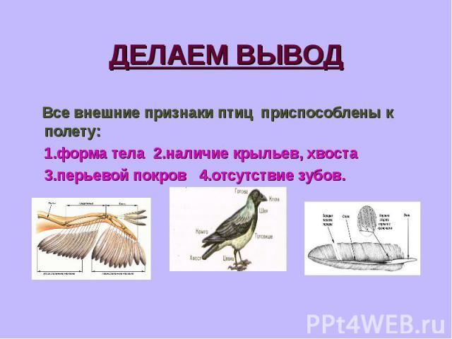 Все внешние признаки птиц приспособлены к полету: Все внешние признаки птиц приспособлены к полету: 1.форма тела 2.наличие крыльев, хвоста 3.перьевой покров 4.отсутствие зубов.