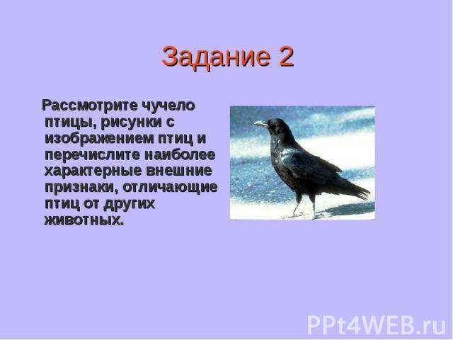 Рассмотрите чучело птицы, рисунки с изображением птиц и перечислите наиболее характерные внешние признаки, отличающие птиц от других животных.