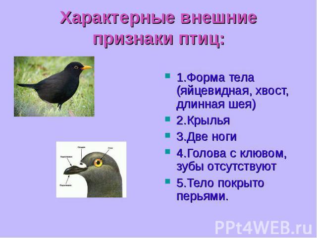1.Форма тела (яйцевидная, хвост, длинная шея) 1.Форма тела (яйцевидная, хвост, длинная шея) 2.Крылья 3.Две ноги 4.Голова с клювом, зубы отсутствуют 5.Тело покрыто перьями.