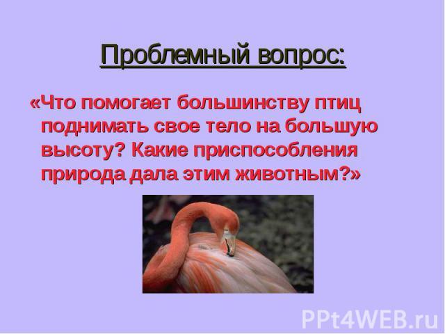«Что помогает большинству птиц поднимать свое тело на большую высоту? Какие приспособления природа дала этим животным?» «Что помогает большинству птиц поднимать свое тело на большую высоту? Какие приспособления природа дала этим животным?»