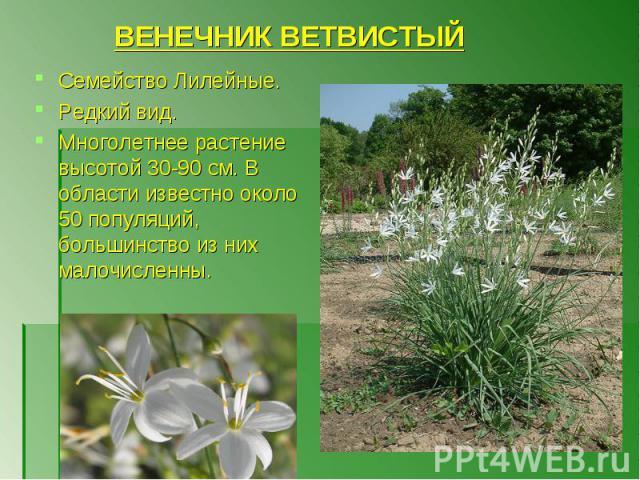 Семейство Лилейные. Семейство Лилейные. Редкий вид. Многолетнее растение высотой 30-90 см. В области известно около 50 популяций, большинство из них малочисленны.