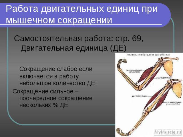 Самостоятельная работа: стр. 69, Двигательная единица (ДЕ) Самостоятельная работа: стр. 69, Двигательная единица (ДЕ)