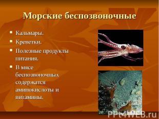 Морские беспозвоночные Кальмары. Креветки. Полезные продукты питания. В мясе бес