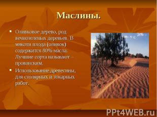 Маслины. Оливковое дерево, род вечнозеленых деревьев. В мякоти плода (оливок) со