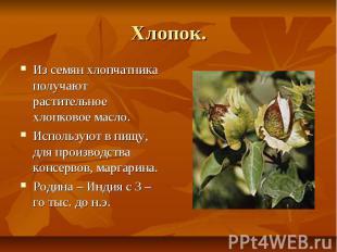 Хлопок. Из семян хлопчатника получают растительное хлопковое масло. Используют в