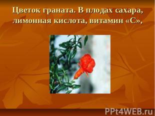 Цветок граната. В плодах сахара, лимонная кислота, витамин «С»,
