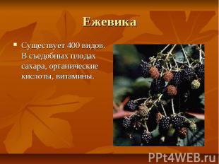 Ежевика Существует 400 видов. В съедобных плодах сахара, органические кислоты, в