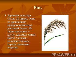 Рис. Зерновая культура. Около 20 видов. Одно из древнейших продовольственных рас