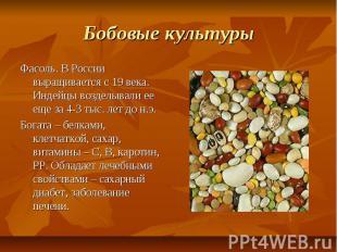 Бобовые культуры Фасоль. В России выращивается с 19 века. Индейцы возделывали ее