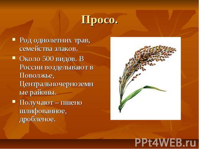Просо. Род однолетних трав, семейства злаков. Около 500 видов. В России возделывают в Поволжье, Центральночерноземные районы. Получают – пшено шлифованное, дробленое.