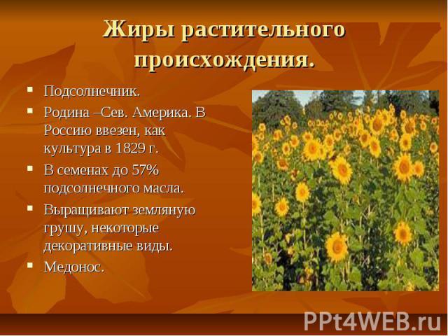 Жиры растительного происхождения. Подсолнечник. Родина –Сев. Америка. В Россию ввезен, как культура в 1829 г. В семенах до 57% подсолнечного масла. Выращивают земляную грушу, некоторые декоративные виды. Медонос.