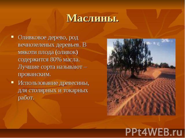 Маслины. Оливковое дерево, род вечнозеленых деревьев. В мякоти плода (оливок) содержится 80% масла. Лучшие сорта называют – прованским. Использование древесины, для столярных и токарных работ.