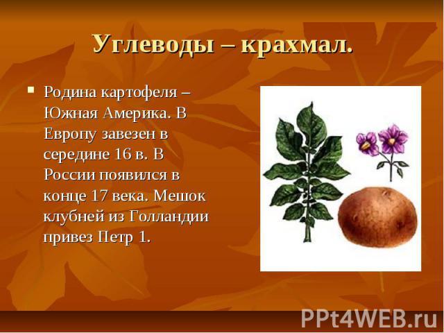 Углеводы – крахмал. Родина картофеля –Южная Америка. В Европу завезен в середине 16 в. В России появился в конце 17 века. Мешок клубней из Голландии привез Петр 1.