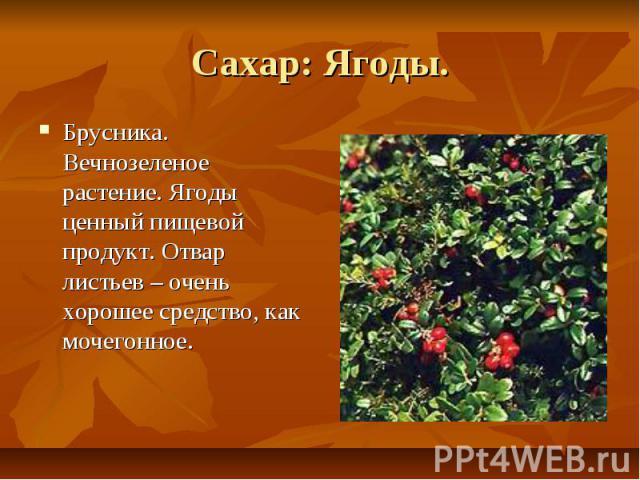 Сахар: Ягоды. Брусника. Вечнозеленое растение. Ягоды ценный пищевой продукт. Отвар листьев – очень хорошее средство, как мочегонное.