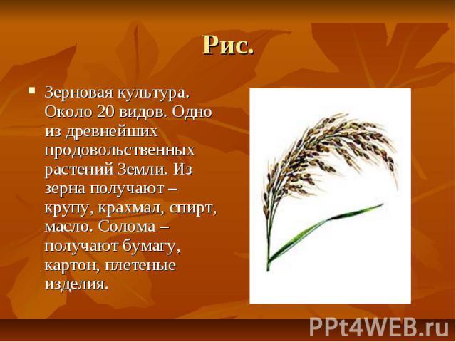 Рис. Зерновая культура. Около 20 видов. Одно из древнейших продовольственных растений Земли. Из зерна получают – крупу, крахмал, спирт, масло. Солома – получают бумагу, картон, плетеные изделия.