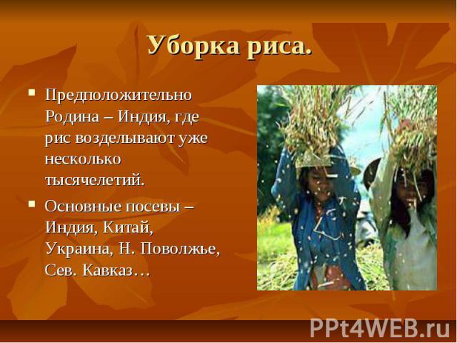 Уборка риса. Предположительно Родина – Индия, где рис возделывают уже несколько тысячелетий. Основные посевы – Индия, Китай, Украина, Н. Поволжье, Сев. Кавказ…