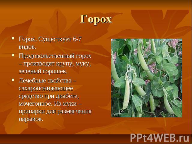 Горох Горох. Существует 6-7 видов. Продовольственный горох – производят крупу, муку, зеленый горошек. Лечебные свойства – сахаропонижающее средство при диабете, мочегонное. Из муки – припарки для размягчения нарывов.